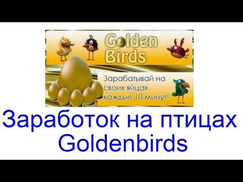 Курицы онлайн заработок индикаторы форекс с шаблонами