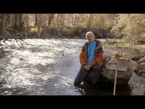 Clean Water Has Bugs In It - Stoneflies and Water Quality