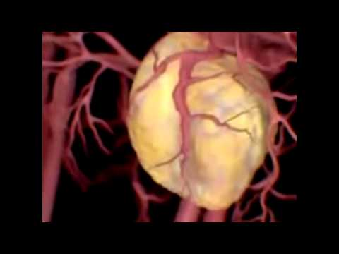 Как влияет алкоголь на сердце