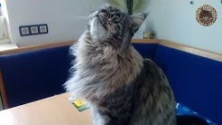Süßes Katzenvideo: Genußmomente