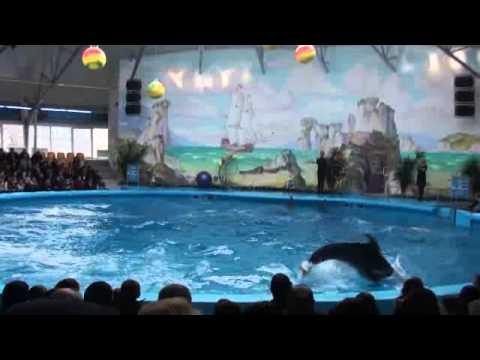 дельфинарий в Ереване
