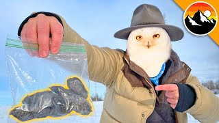 WHAT DID I FIND?! - Dissecting Snowy Owl Pellets!