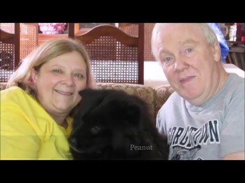 2015 Adoptions - Chow Chow Rescue of Central New York