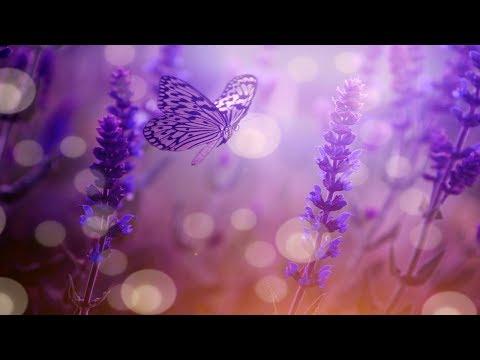 Beautiful Relaxing Calming Music, Cleanse Negative Energy (Calm Positive Energy) Sleep Music★ 64 mp3
