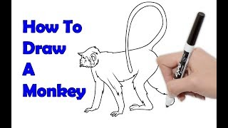 How to Draw a Monkey Sketch with Pencil 3D Drawing