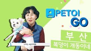 [PETOI] 페토이GO 개동이네 편