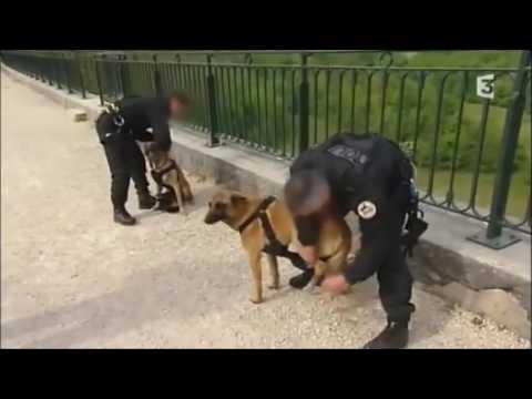 Reportage sur les chiens du RAID