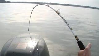 Biggest Catfish ever caught on Team Catfish video!