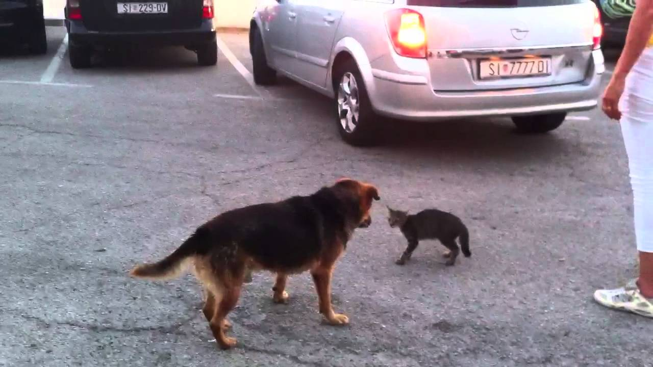 Kitten almost killed in a fight vs Dog - MUST SEE -