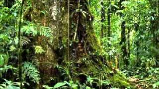 jungle music.wmv