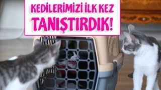 Eve Yeni Kedi Geldi (ALIŞTIRMA)