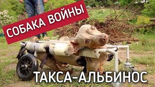 Рай для собак. Жертва войны на Донбассе.