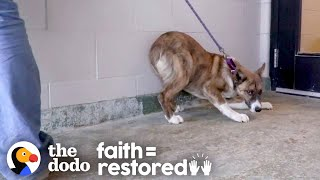 Terrified Dog Finds Out How Much Fun Life Can Be | The Dodo Faith = Restored