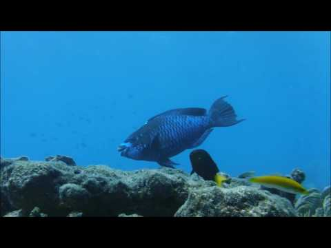 Girl hookah diving sombrero Reef using Air on Demand Technology by Gator Gill
