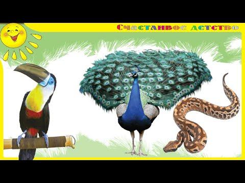 Мультфильм животные джунглей