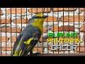 Burung Mantenan Gacor Masteran Kicau  Mp3 - Mp4 Download