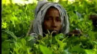 Harvesting Tea – Sri Lanka