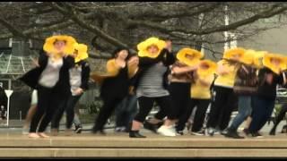Cancer Society Daffodil Day Flash Mob at Aotea Square