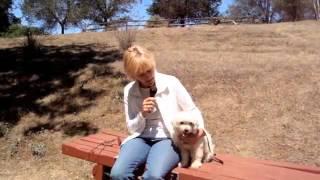 Fallbrook Dog Park Fundraiser