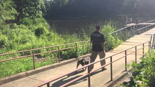 Check Out Some Of The Olk9 Trained Dogs This Month In One Clip!