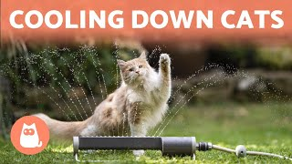 How to Keep a CAT COOL in SUMMER ☀️🐱💦 (6 Tips)