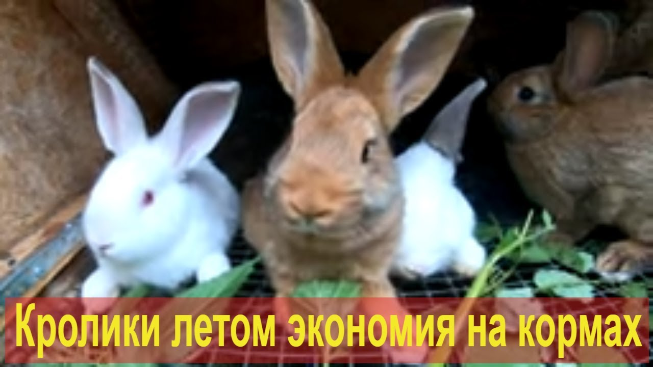 Кролики летом экономия на кормах