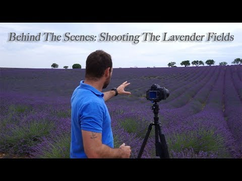 How I Composed Golden Hour & Milky Way Shots At The Lavender Fields in France