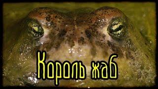 Король жаб (Подлинные показания очевидцев)
