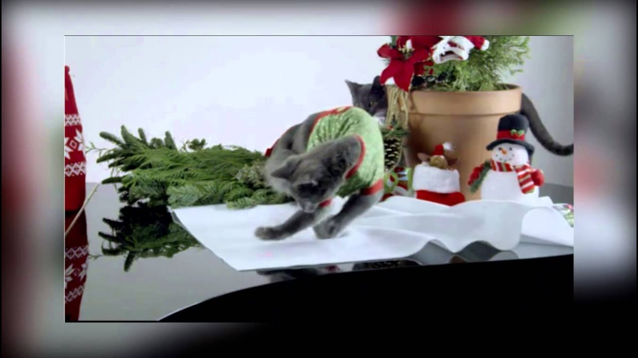 funny new year greetings cat
