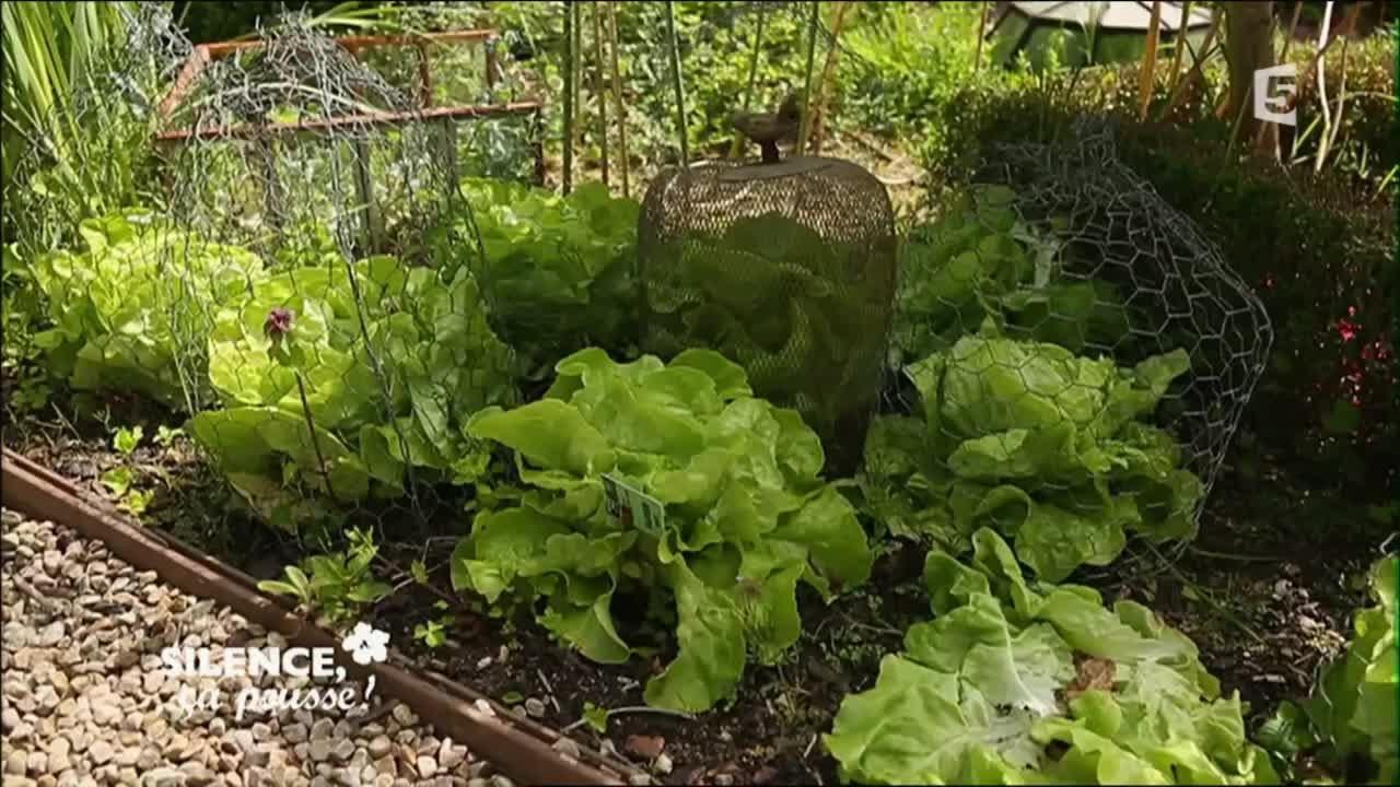 Quelle Salade Planter Maintenant planter des salades tout au long de l'année