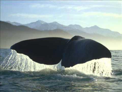 Heathcote Williams _ Whale Nation.wmv
