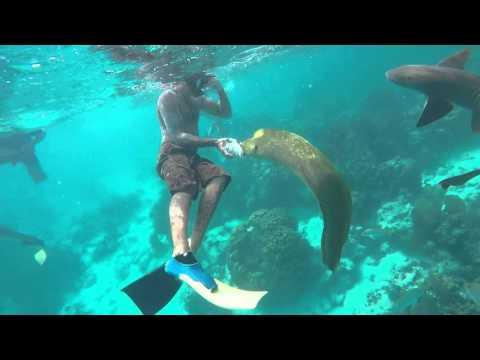 Green Moray Eel (The Incedible Hulk) Belize