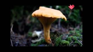 Раскрываем тайны о грибах