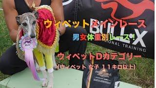 ウィペット メイン 男女体重別レース! ウィペットDカテゴリー(ウィペ...