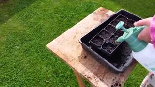 Planting Zinnia's