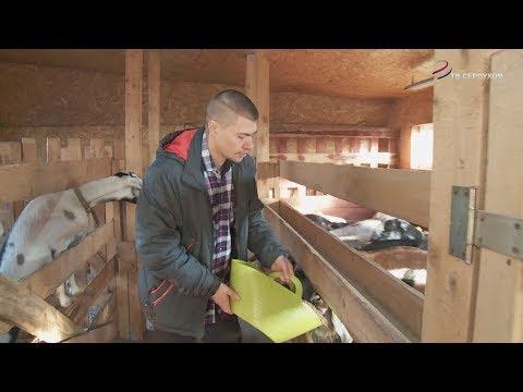 Житель Серпухова разводит коз элитных пород
