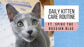 Raising Our Russian Blue Kitten: Daily Care Routine (5 months old)