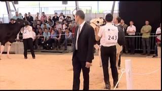 Fougeres 2014 - Meilleur Eleveur et Grande Championne