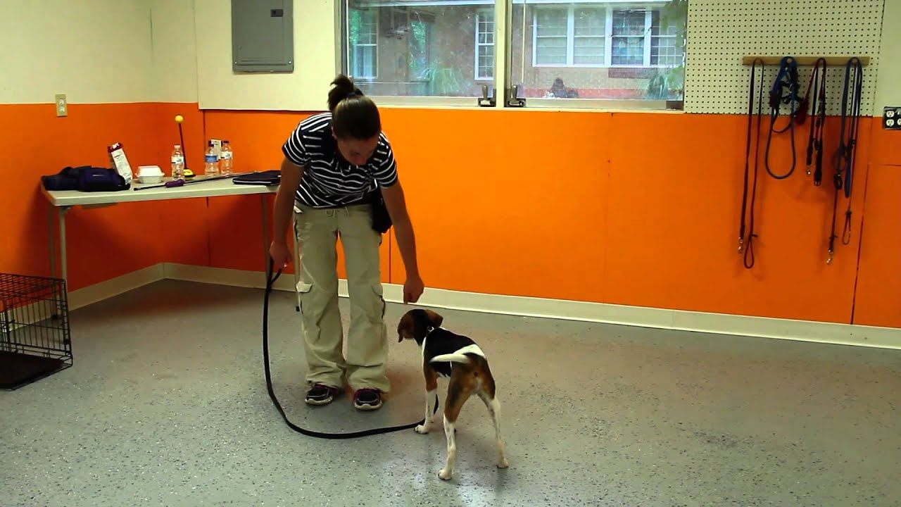 how to teach my dog to walk on a leash