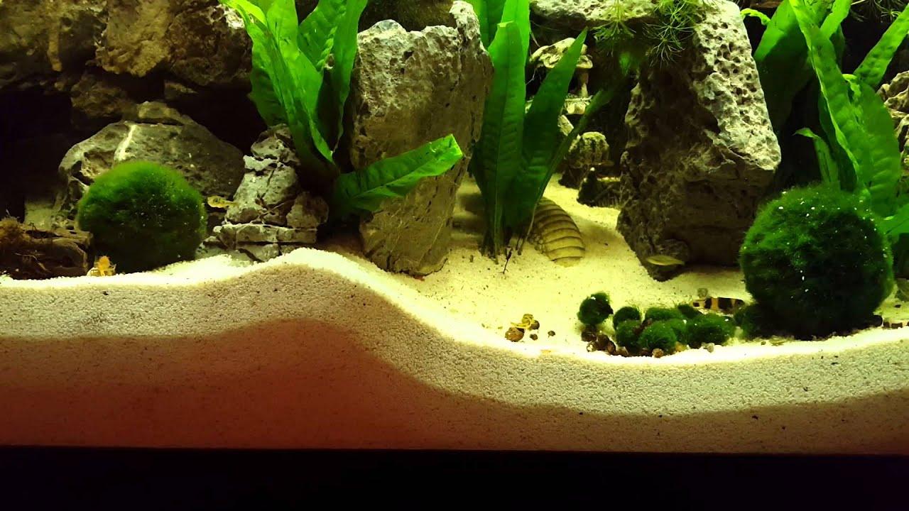 Sand fall, pea puffer, mini lobsters - YouTube