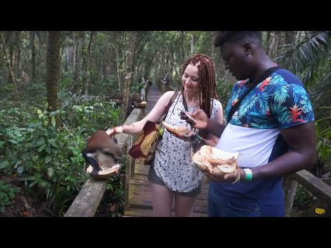 Lekki Conservation Center Lagos Nigeria | Fun Day With Monkeys