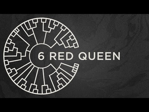 Area 11 - Red Queen [Official Lyric Video]