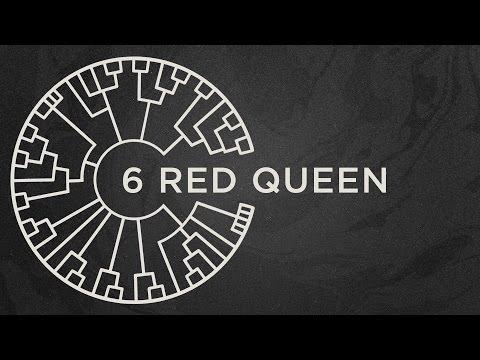Area 11 - Red Queen
