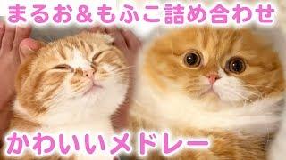 Maruo & Mofuko's cute assortment medley! & Mofuko's miracle shot!