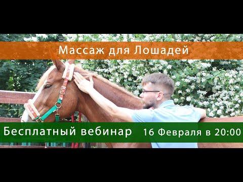 Массаж для Лошадей Денис Хомич