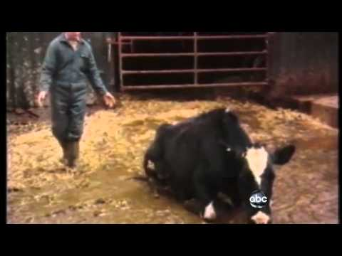 Mad Cow Disease Found in California