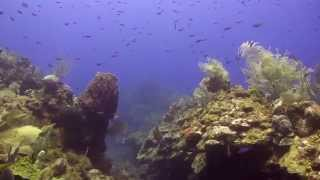 Diving Overheat Reef with Roatan Divers