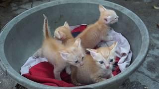 TXT - Đàn Mèo Con Siêu Dể Thương - Cat So Cute