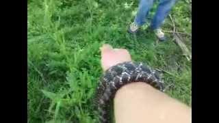 Su yılanı yakalama (Bizim ailenin tepkileri)