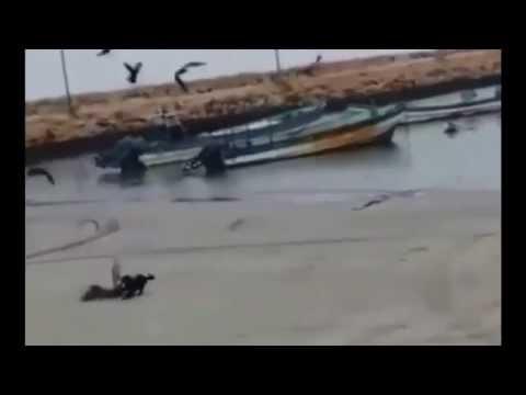 Aksi Kucing Hitam Menangkap Burung Terbang